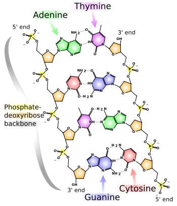1.2 Estructura general de una célula eucariota