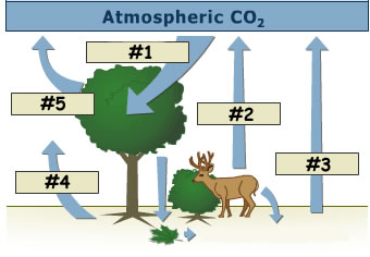 Unit 7 benchmark 2 cycles carboncycle1g ccuart Choice Image