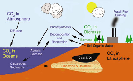Carboncycle2
